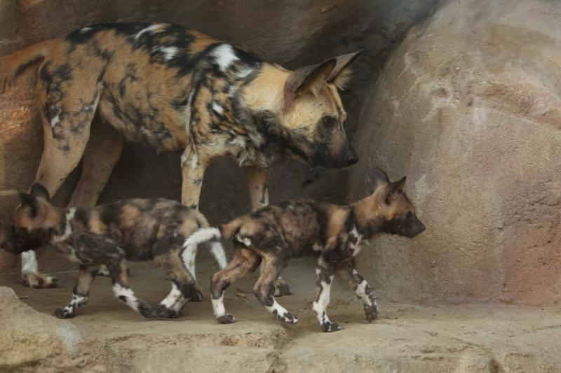 3_AWD Puppies_Jan 18_3