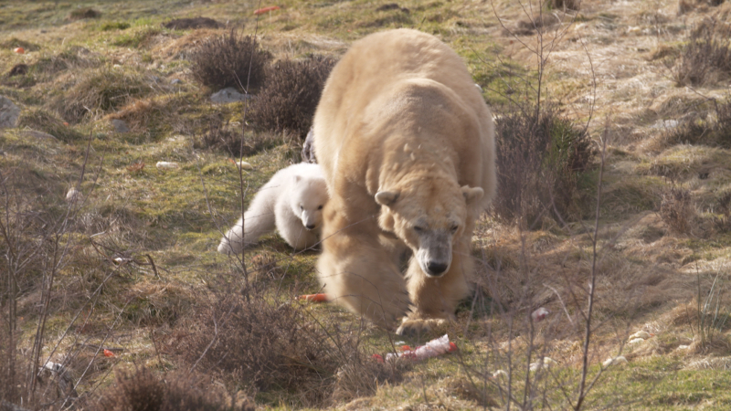 6_Polar Bear cub and Victoria