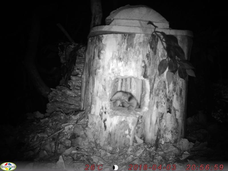 5_Tamandua baby night cam first image (c) ZSL London Zoo