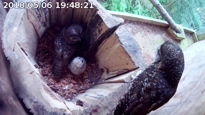 ChickB-18 Newly Hatched