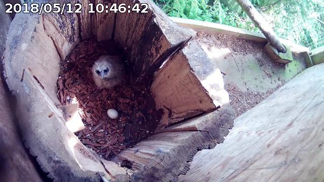 ChickB-18 Nest Return Day2