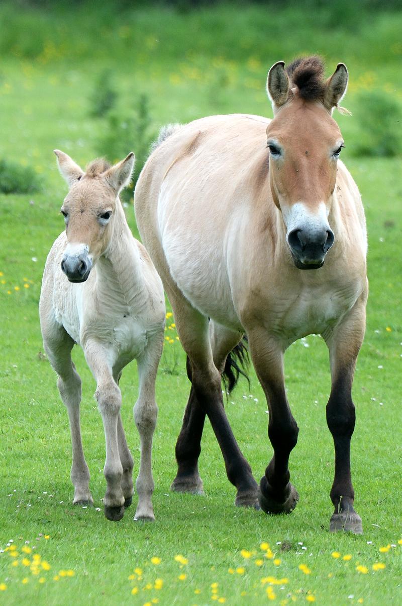 3_zsl foal 5