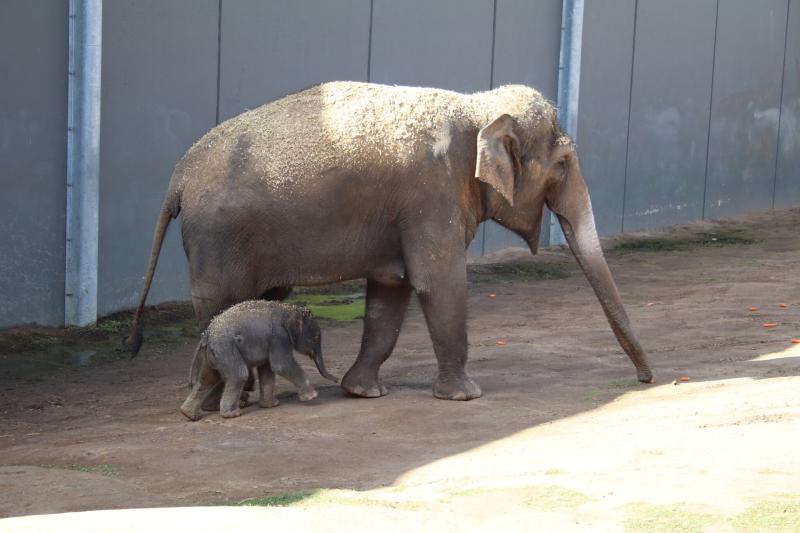 2_elephant calf dubbo