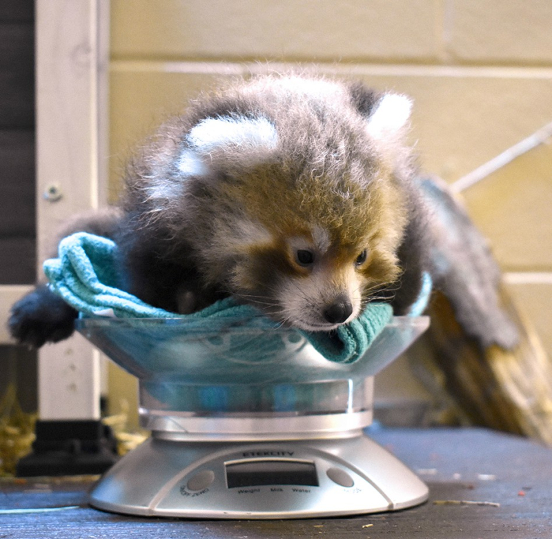 Virginia Zoo Photo 1