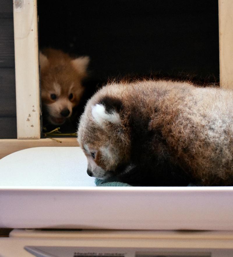 Virginia Zoo Photo 3