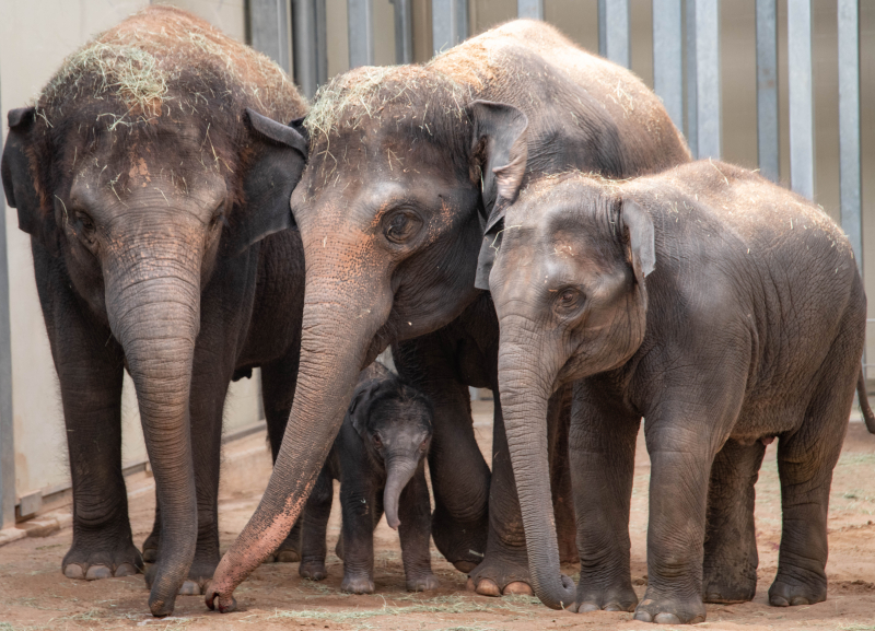 Elephant Calf Kai 41 (1 of 1)