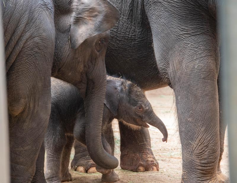 Elephant Calf Kai 19 (1 of 1)
