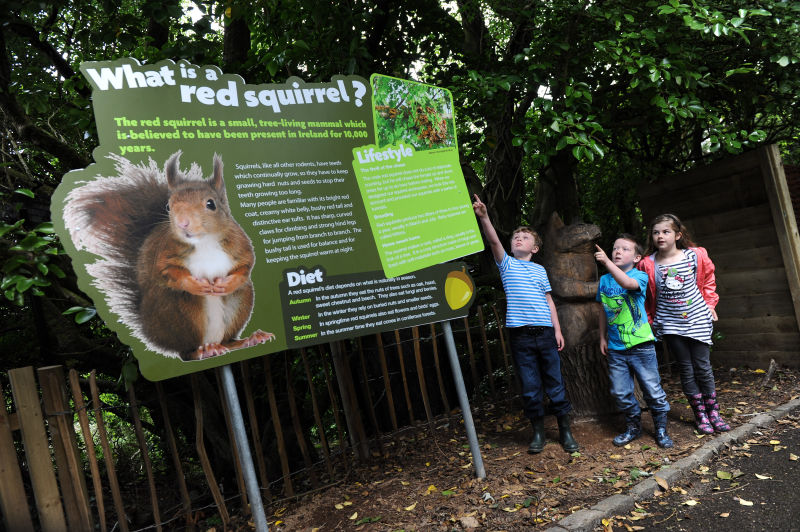 (3) The aim of Belfast Zoo's red squirrel nook is education but the zoo also plays a vital and leading role in red squirrel conservation in Northern Ireland.