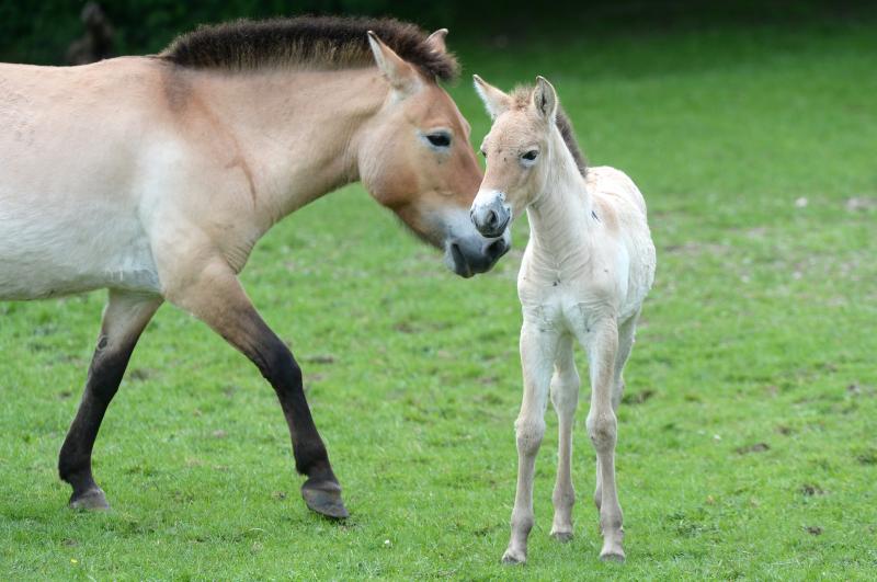 4_zsl foal 3