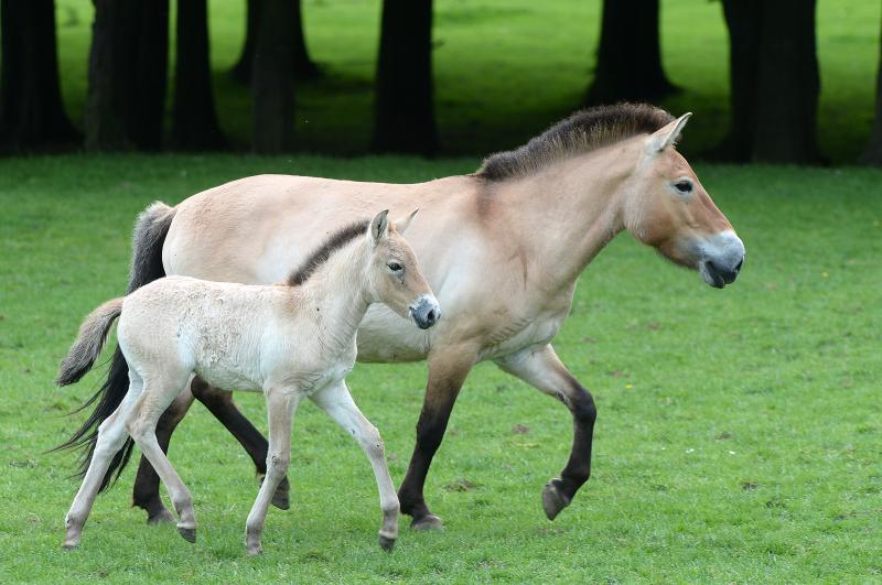 6_zsl foal 2