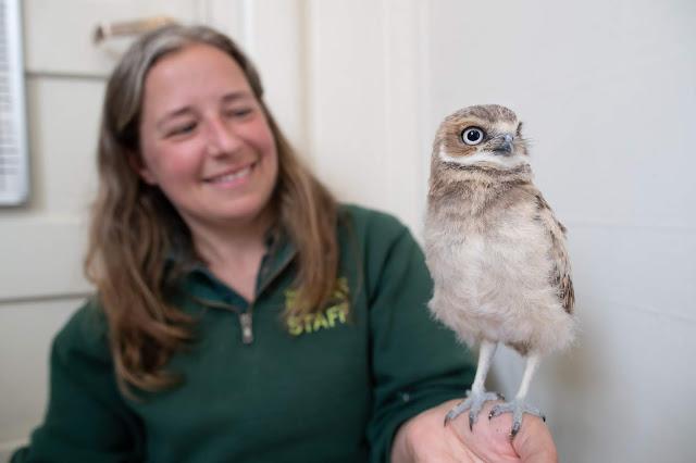 Day 12 with Susan Susan Burchardt:Woodland Park Zoo