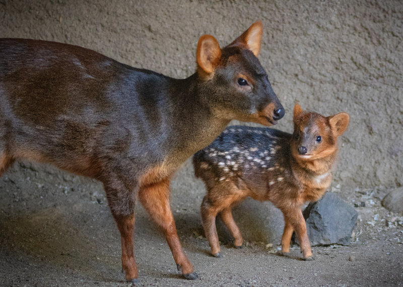 5_Pudu Baby with Mom JEP_7907