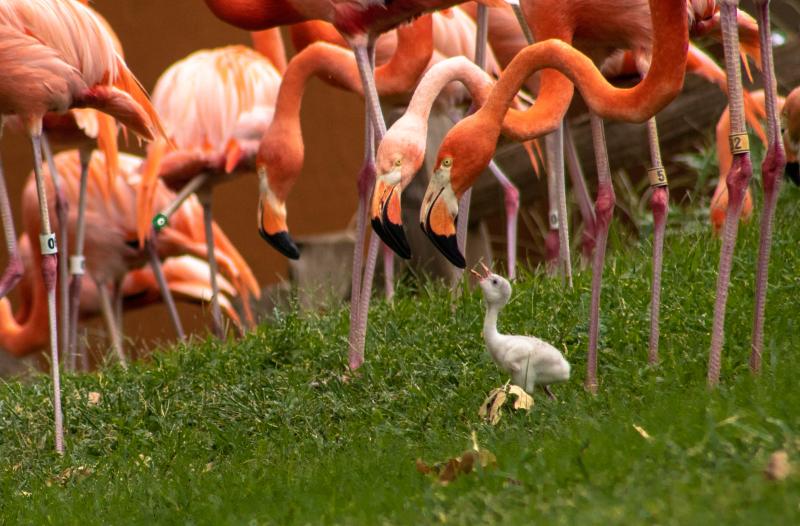4_OKC Zoo Flamingo Chick 4 (1 of 1)