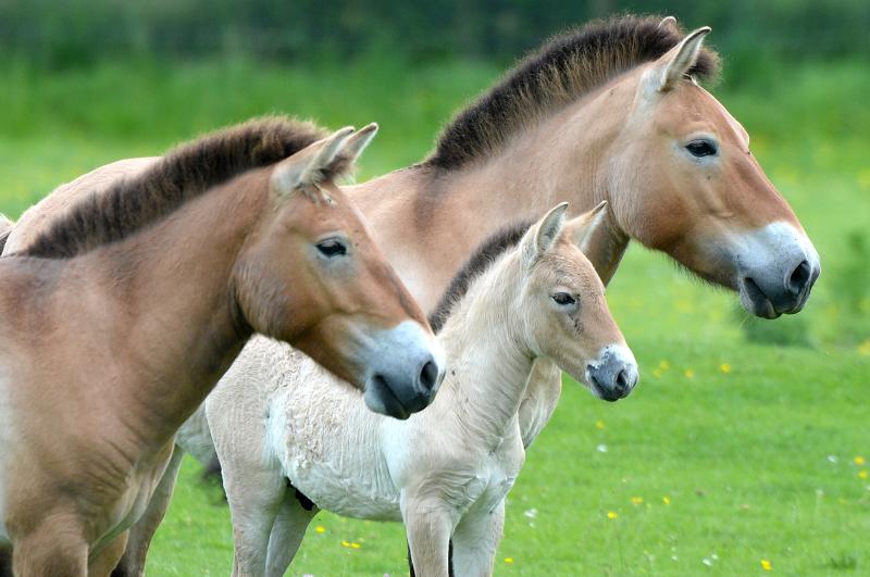 1_zsl foal 4