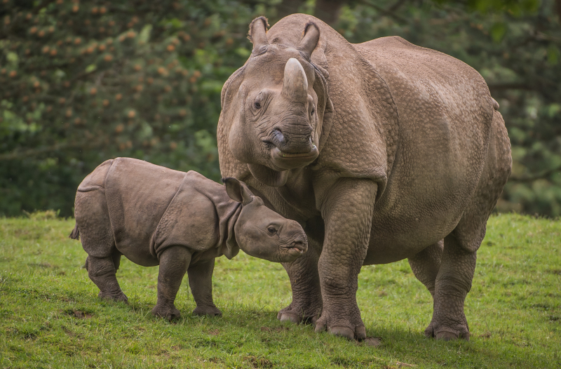 Zoo reveals baby rhino's name (37)