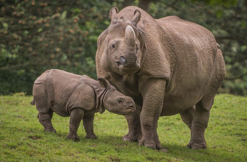 Zoo reveals baby rhino's name (37)
