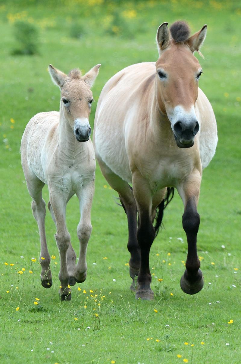 2_zsl foal 6
