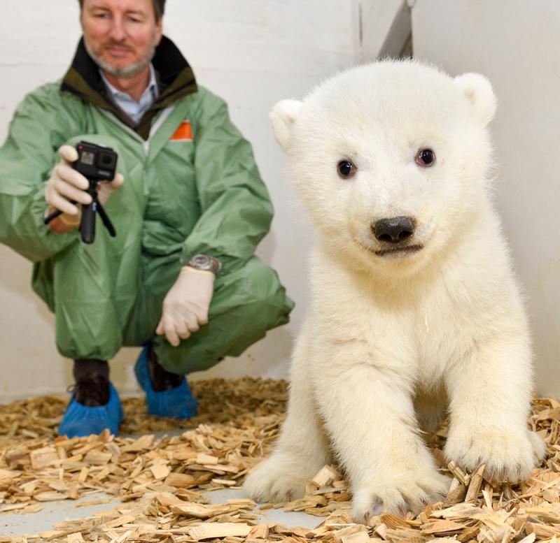 2_Erste Tierarztuntersuchung Eisbär_Dr.Knieriem_TierparkBerlin_2019