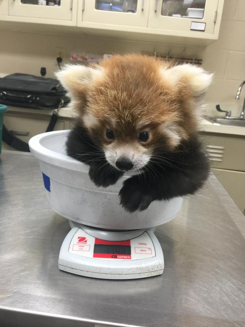 2_Loofah weight