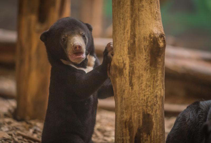 UK's first baby sun bear named Kyra (24)