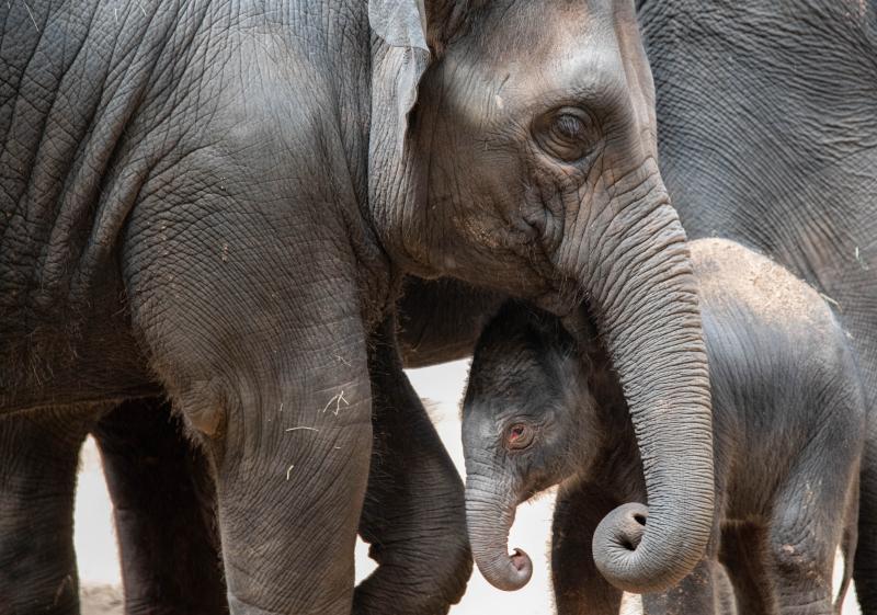 Elephant Calf Kai 23 (1 of 1)