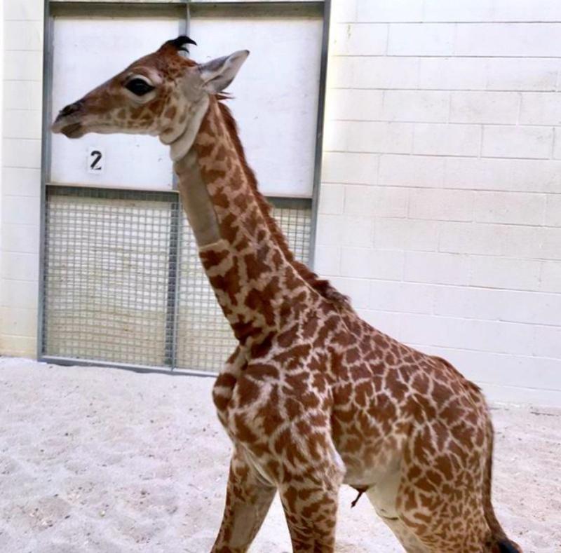 Virginia Zoo Photo2