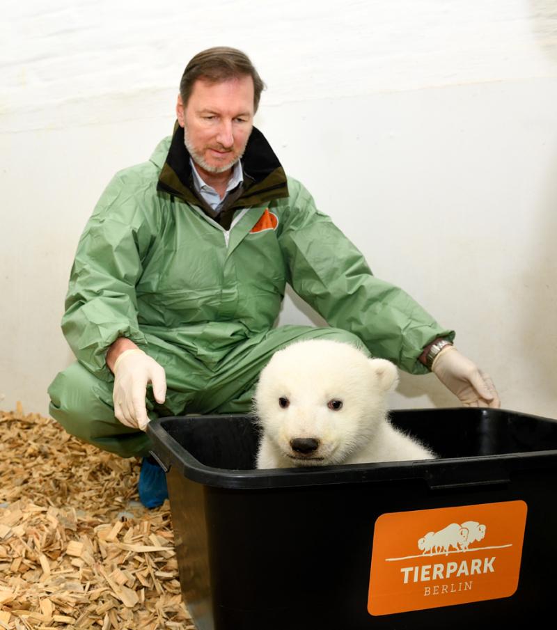 3_Eisbär auf Waage_Dr. Knieriem_Tierpark Berlin_2019