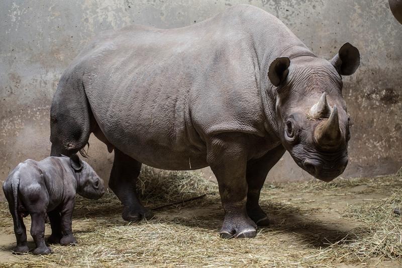 4_20190524_CB_rhino-8