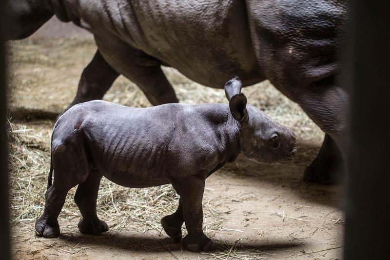 5_20190524_CB_rhino-7