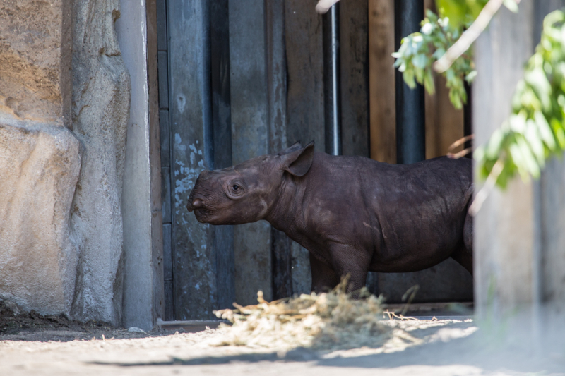 1_20190618_CB_rhino first day out-7