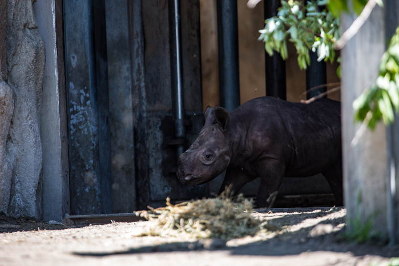 3_20190618_CB_rhino first day out-4