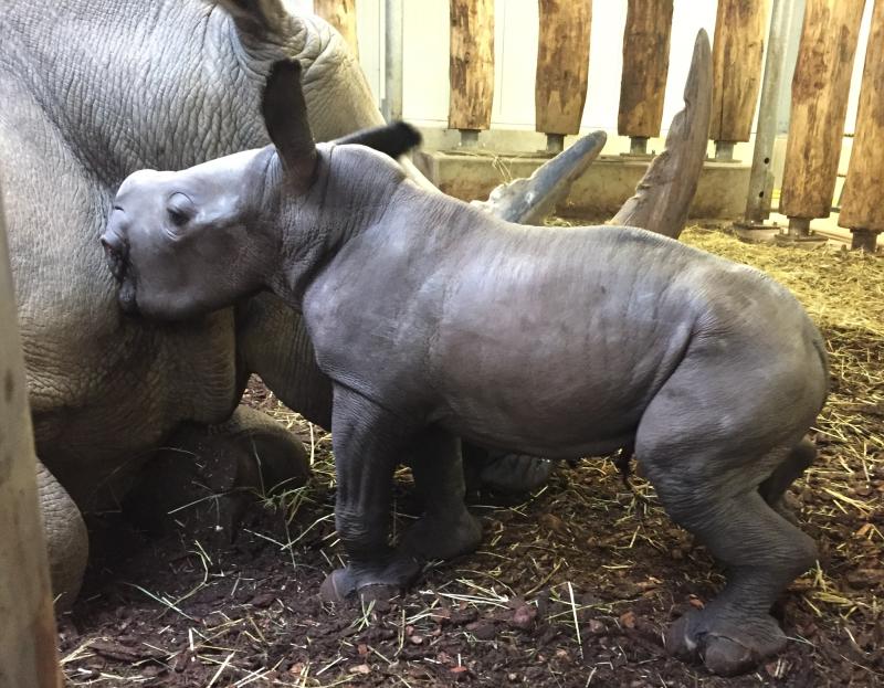 1_Newborn-rhino-3