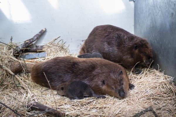 Baby Makes Three At Point Defiance Zoo  Aquarium - Zooborns-7228