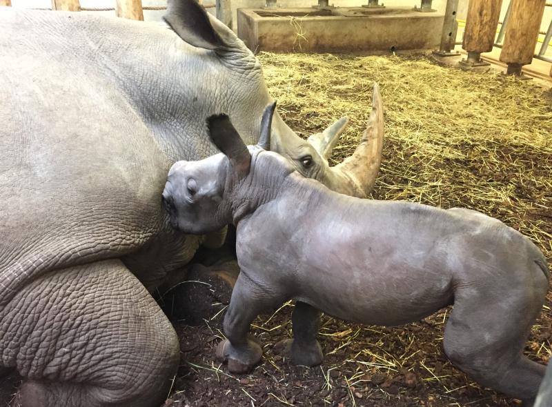 2_Newborn-rhino-2