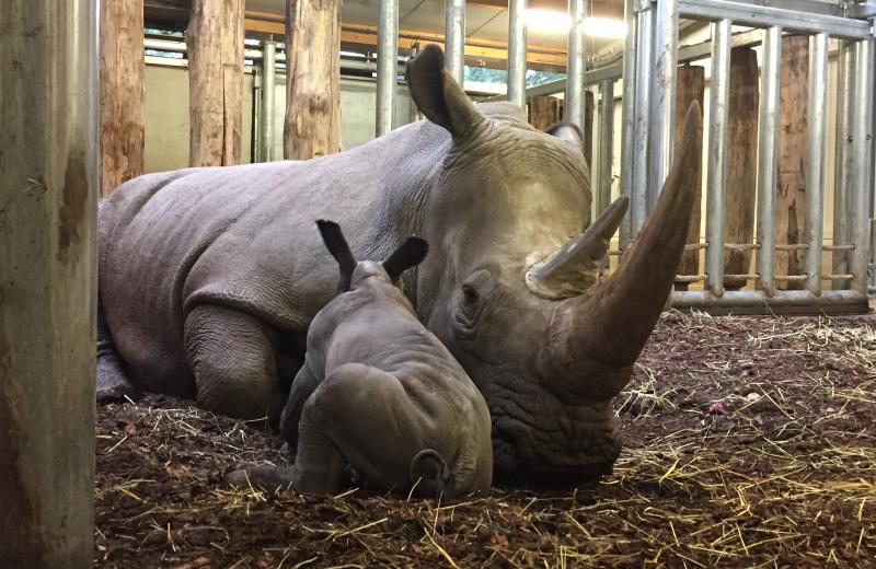 3_Newborn-rhino-1
