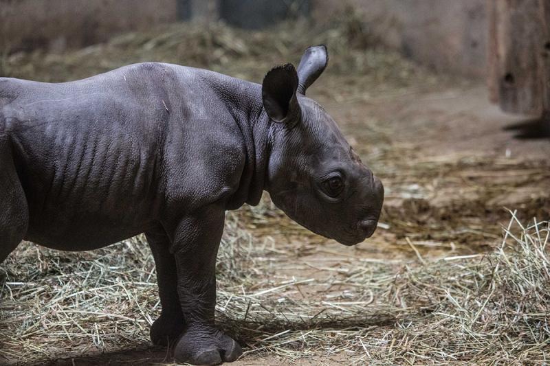 1_20190524_CB_rhino-12