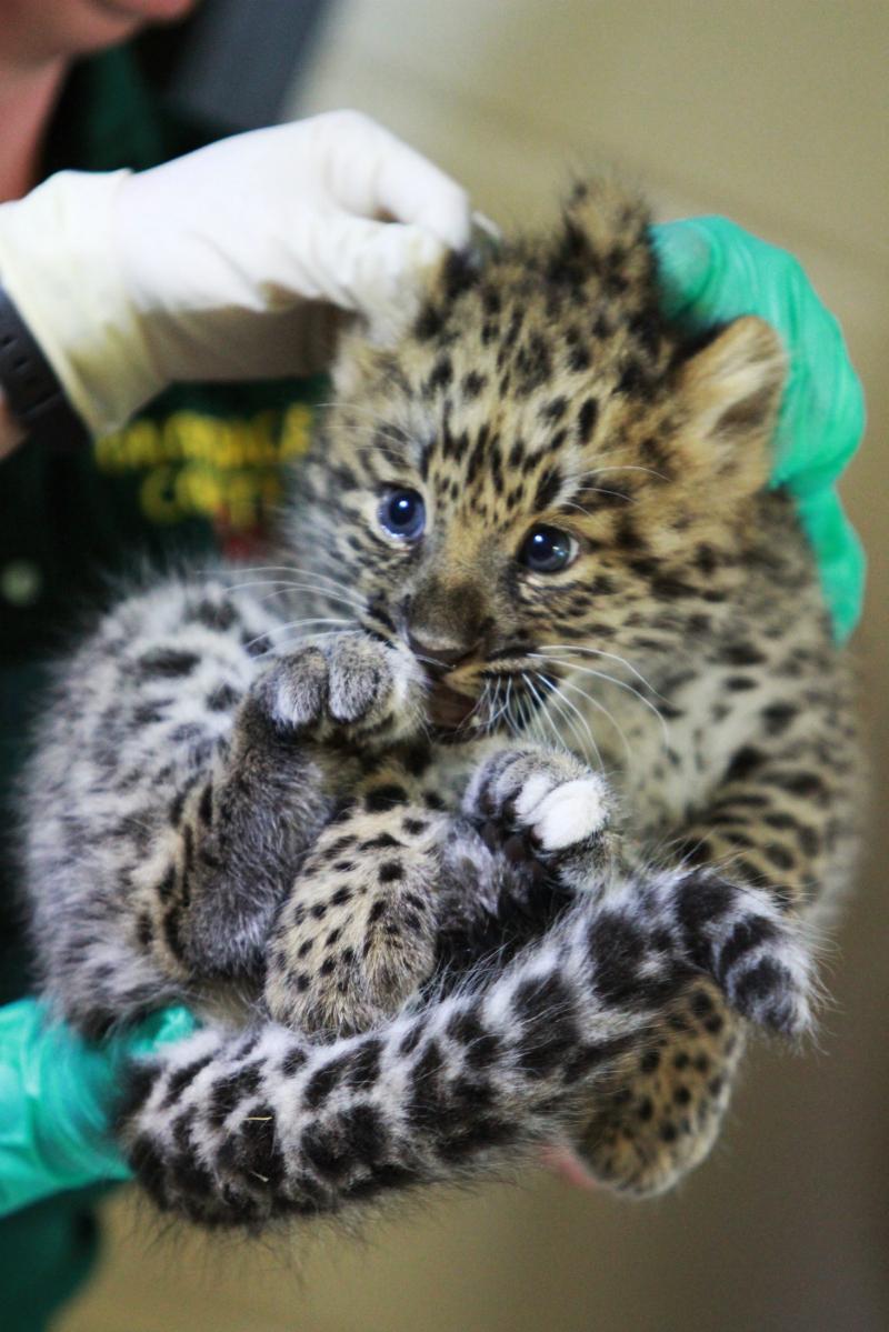 Female cub 7-31-19