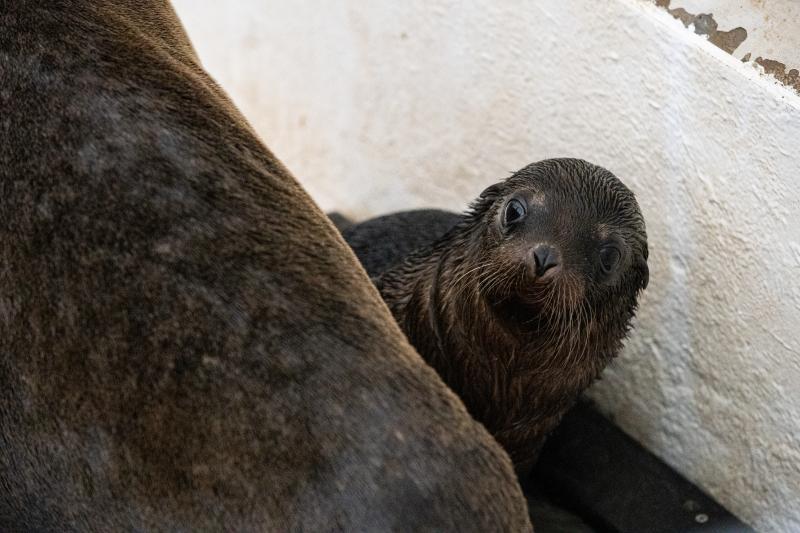 20200807-CWheeler-Seal-Pup-42