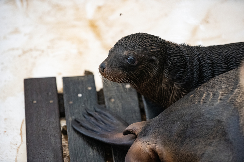 20200807-CWheeler-Seal-Pup-5
