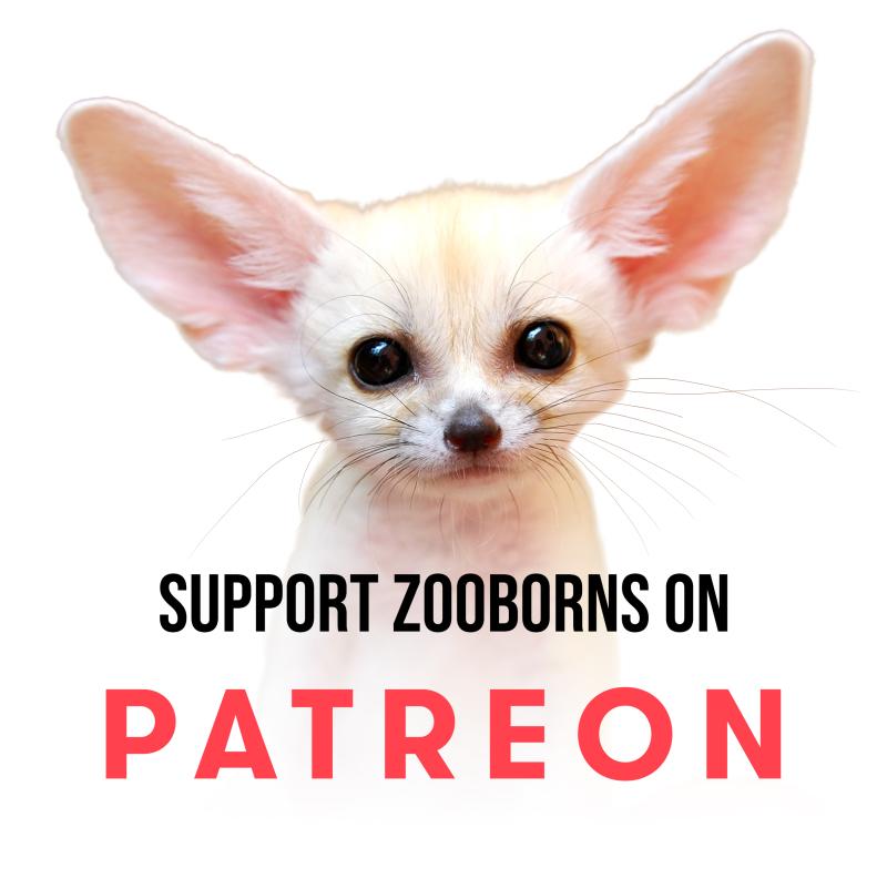 Patreon-Promo