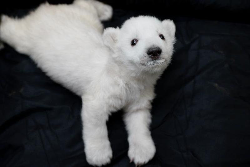 Polar Bear Cub 4