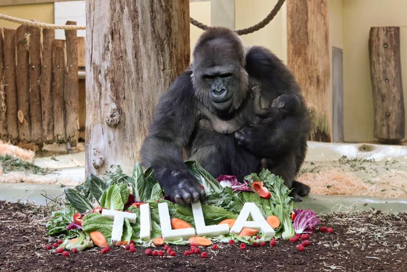 Tilla_braucht_ne Villa_Zoo Berlin (2)