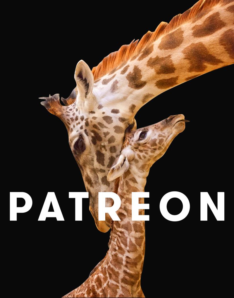 Patreon_shoutoutsm