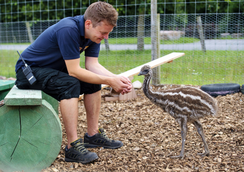 Longleat keeper Jon Ovens with Bueno the emu chick PIC BNPS (1800x1271)
